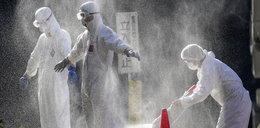 Ptasia grypa znowu atakuje. Koszmar w Japonii