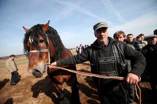 Opłata targowa: Za konia na targu płaci się raz i tylko odpowiedniej osobie