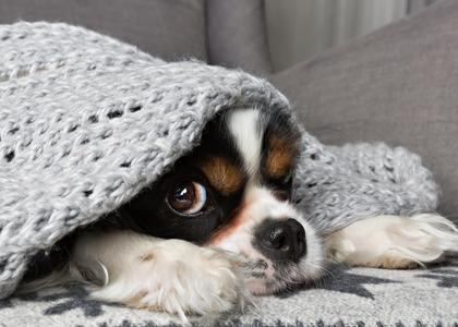 Uczulenie Na Psa I Kota Jak Sobie Radzić Zdrowie