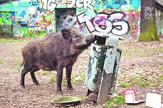divlja svinja foto profimedia-0282732358