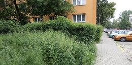 W Krakowie powołano Zarząd Zieleni Miejskiej