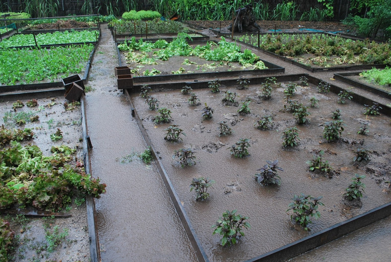 vegetable farm flooded with dirty water
