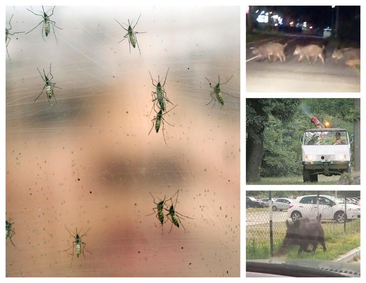 komarci tviterr kombo