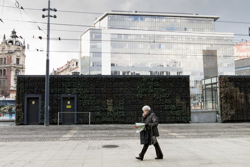 Ratujcie rośliny na rynku w Katowicach!
