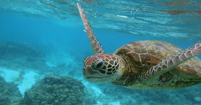 Od dziesięcioleci rafy koralowe mają problem z problemem blaknięcia. Nowa metoda może pomóc w ich odtwarzaniu