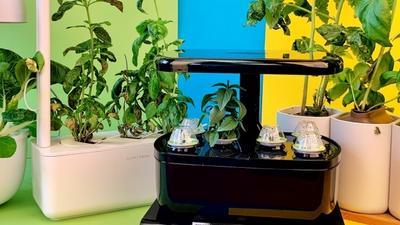 Vergleichstest: 7 smarte Indoor-Gärten ab 35 Euro