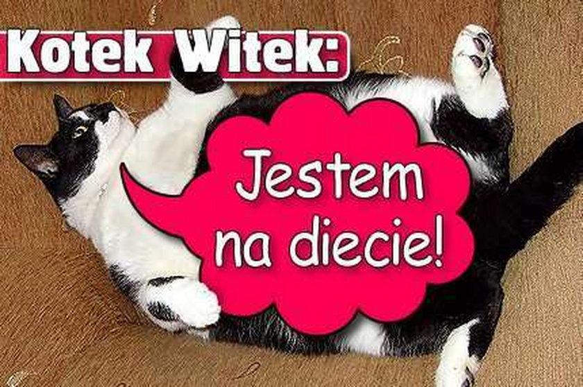 Kotek Witek: Jestem na diecie!