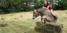 Nastolatka nauczyła krowę skakać przez przeszkody