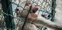 Makabra w sklepie zoologicznym. W koszach truchła papug, zagłodzone na śmierć małpy i 50 martwych chomików