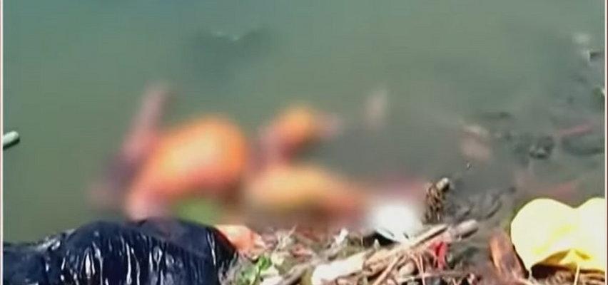 Rozkładające się zwłoki w świętej rzece pożerane przez bezpańskie psy. To ciała ofiar COVID-19? [FILM +18]