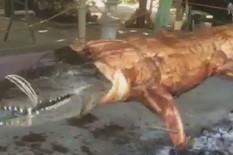 krokodil na ražnju foto facebook