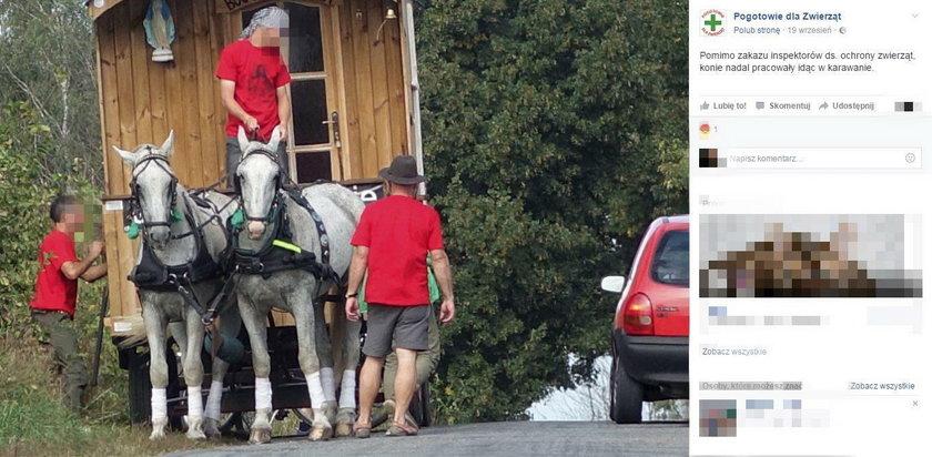 Pielgrzymi znęcali się nad końmi? Prokuratura to sprawdza