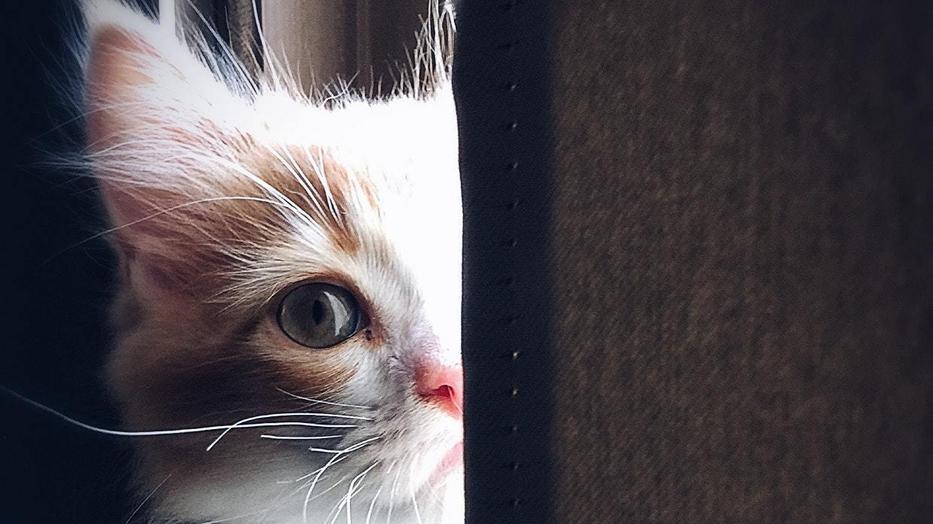 Drótkerítésen át dobálta a macskákat egy veszprémi férfi - ez lett az állatok sorsa /Fotó: Pexels
