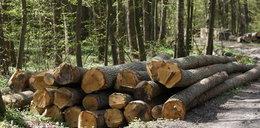 Rosjanie wycinają las przy granicy! To korytarz do ataku?