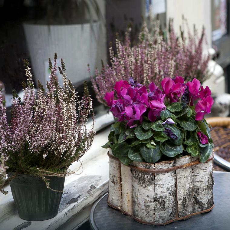 Rośliny doniczkowe to doskonały element dekoracyjny