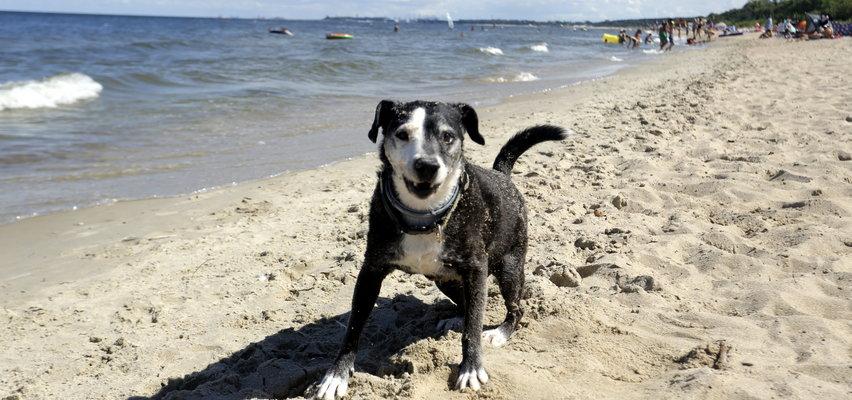W tym mieście nie można wchodzić z psami na plażę. Interweniował RPO