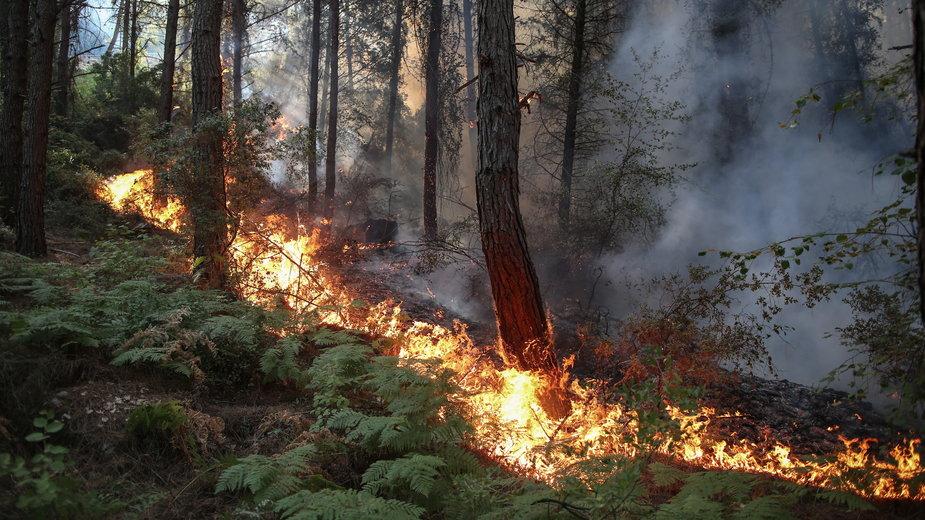Pożary w Turcji w dystrykcie Manavgat
