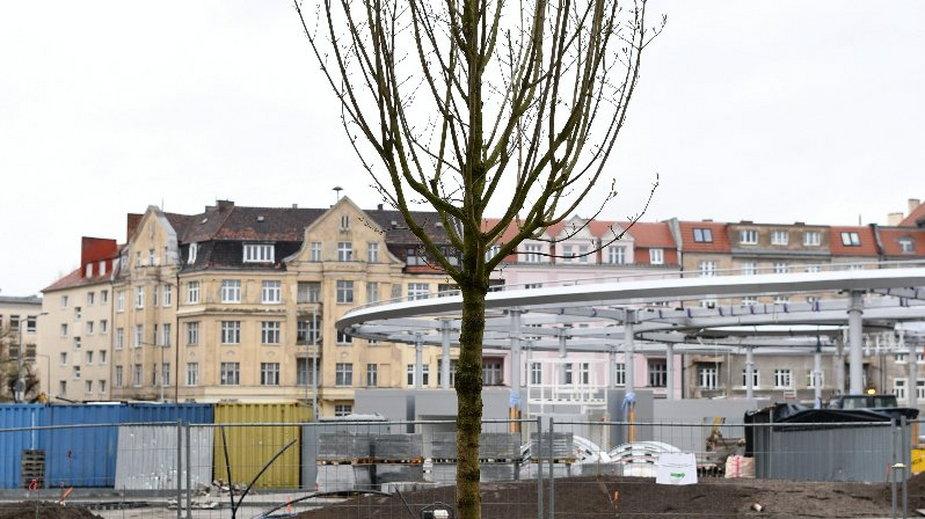 Rynek Łazarski w Poznaniu: nasadzono nowe drzewa i krzewy!