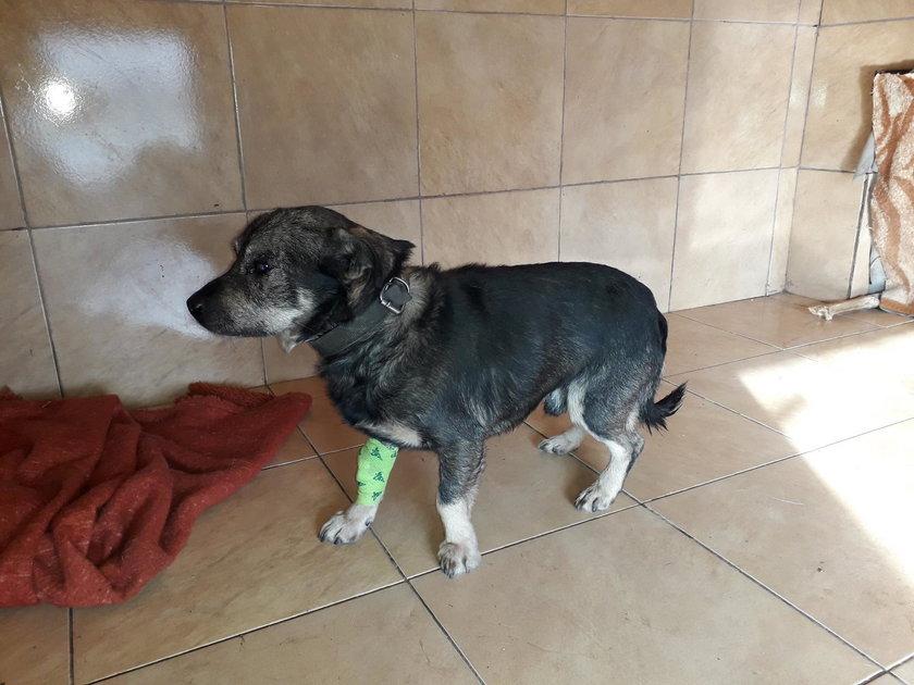Dzielnicowa z Warki uratowała psa. Leżał przymarznięty do chodnika