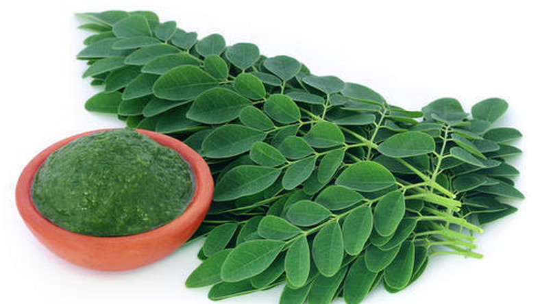 Moringa : 5 health benefits of drinking juice from this tree every day  [indiamart]