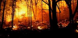 Kto podpalił las na Olechowie?
