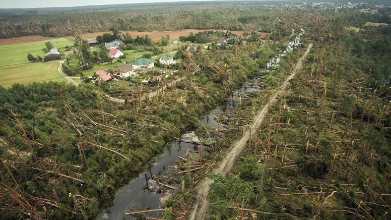 Szkody mają charakter powierzchniowy, zniszczone są całe drzewostany oraz pojedyncze drzewa