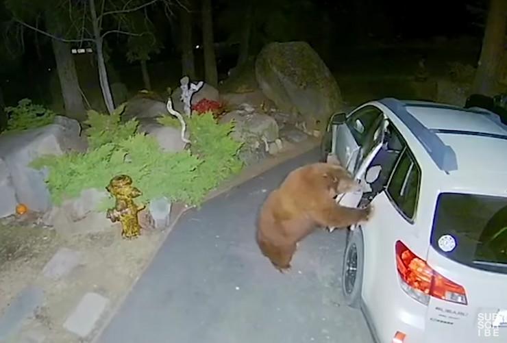 Medved ušao u automobil