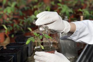 Rośliny a prawa autorskie: Czy GMO można ściągnąć z sieci?