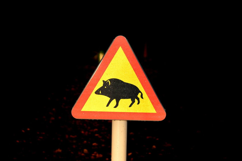 Uwaga na dziki i wiewiórki! Burmistrz stawia w mieście nowe znak