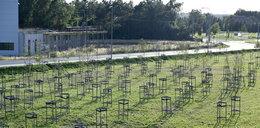 Las Rozpaczy na obwodnicy Leśnicy. Uschło 200 drzew!