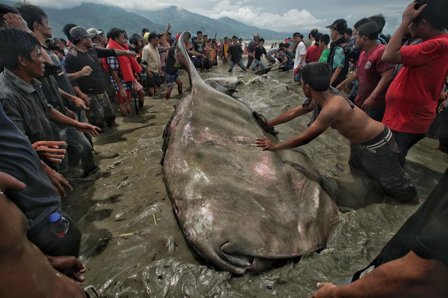 Stranded Whale in Indonesia