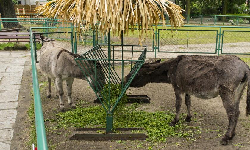 Nie dokarmiajcie zwierząt w zoo - apelują pracownicy ogrodu