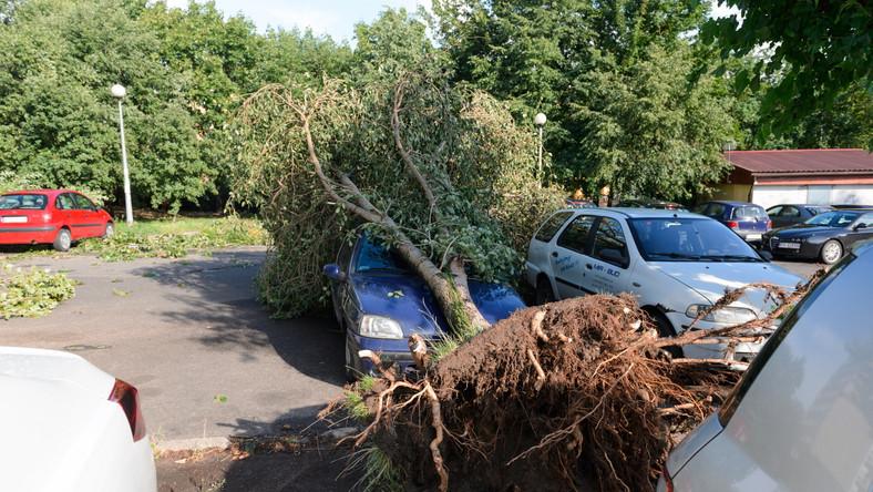 Na poznańskim osiedlu Winiary przy ulicy generała Maczka kilka drzew przewróciło się na zaparkowane tam samochody