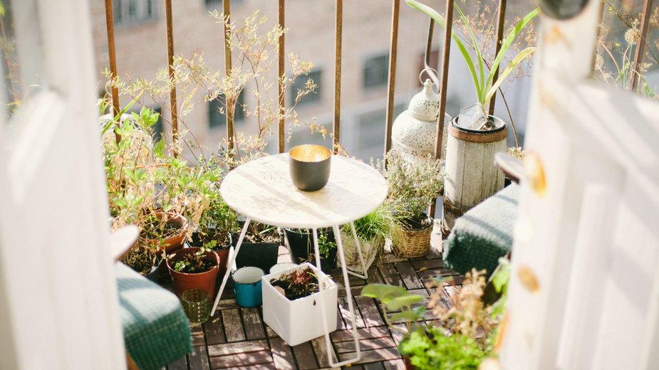 Jak łatwo stworzyć dżunglę na balkonie