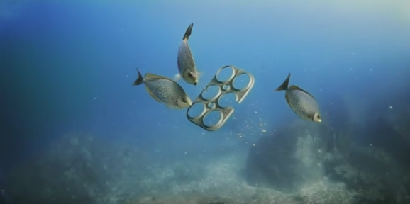 Značajne promene utiču na floru i faunu okeana