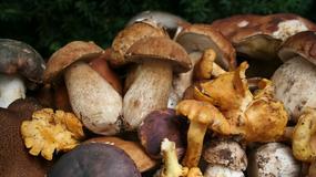 Słowacja: trudne czasy dla grzybiarzy