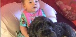 Ten pies zginął ratując życie dziecka