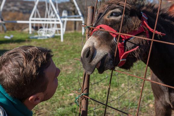 Farma magaraca Martinići: Kao i čovek i magarci vole pažnju i nežnost