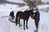 braca stanojevic i kobila 2(1)