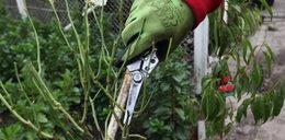 Zaopiekuj się jadalnymi roślinami przed zimą!