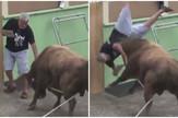 bik, borbe sa bikovima, portugal