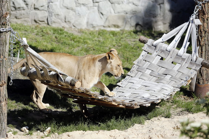 Chorzów. Zbiórka zabawek dla zwierząt ze Śląskiego Ogrodu Zoologicznego