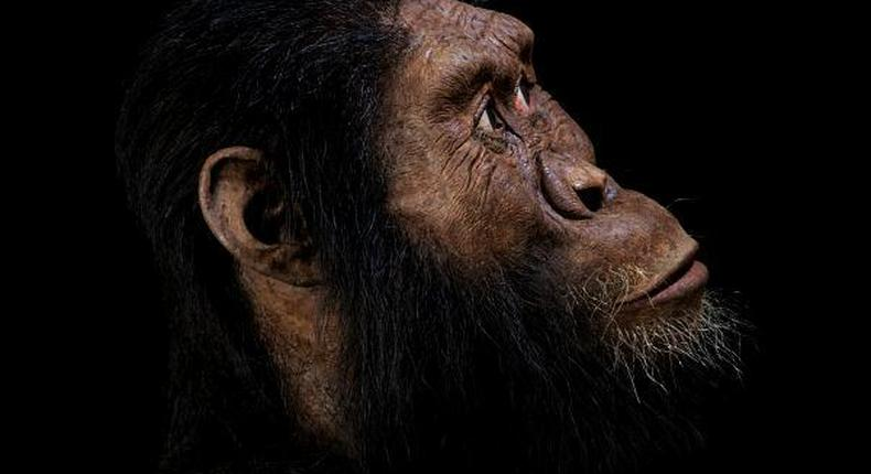 The face of humans as they looked some 3.8 million years ago. (EuroNews)