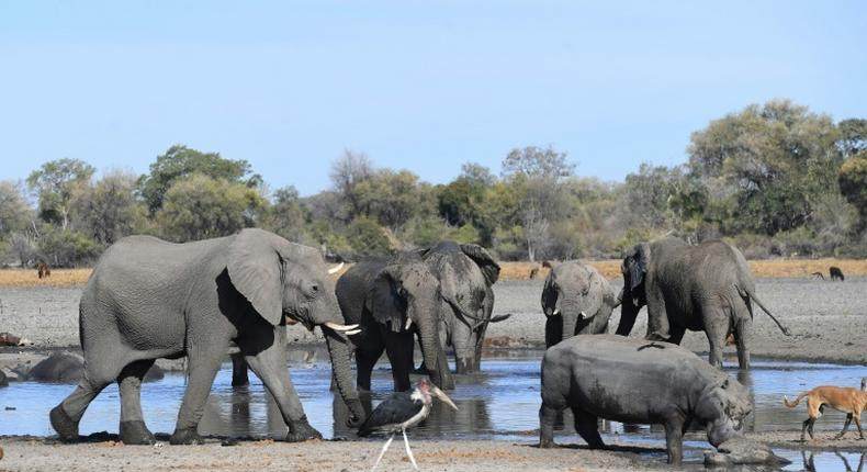 Botswana is home to about 13,000 elephants