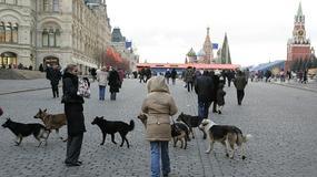 Sfory Moskwy
