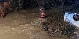 Straszna śmierć trzech wolontariuszek na Słowacji. Zginęły, ratując psy ze schroniska