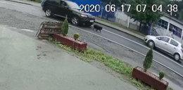Zwyrodnialec celowo dodał gazu, żeby przejechać psa. Nagranie