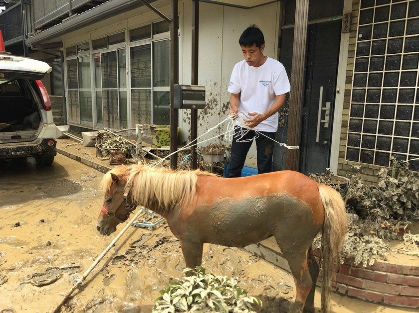 Koń utknął na dachu. Skąd się tam wziął?
