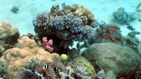 Zmiany klimatyczne zniszczą rafę koralową USA w ciągu trzydziestu lat