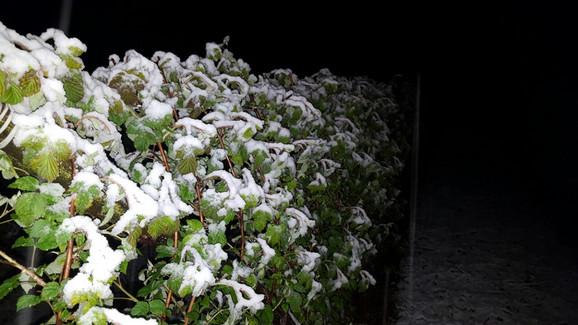 Sneg je mngoo naštetio poljoprivrednim proizvodima
